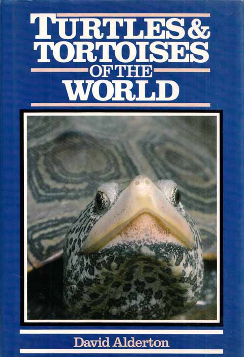 Image for Turtles & Tortoises of the World