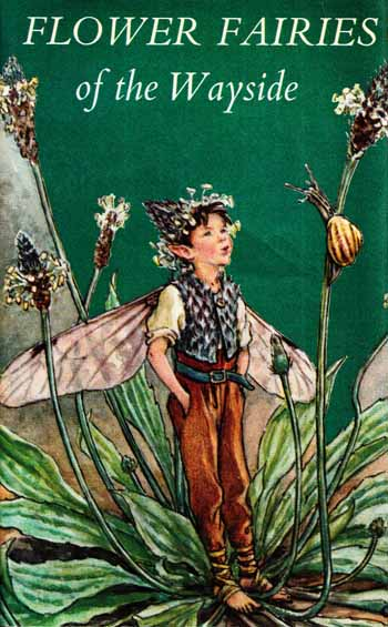 Image for Flower Fairies of the Wayside
